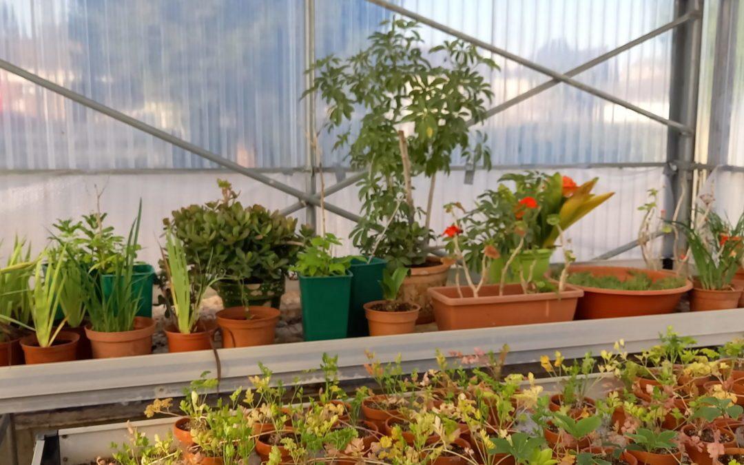 Vente de plants par la SEGPA